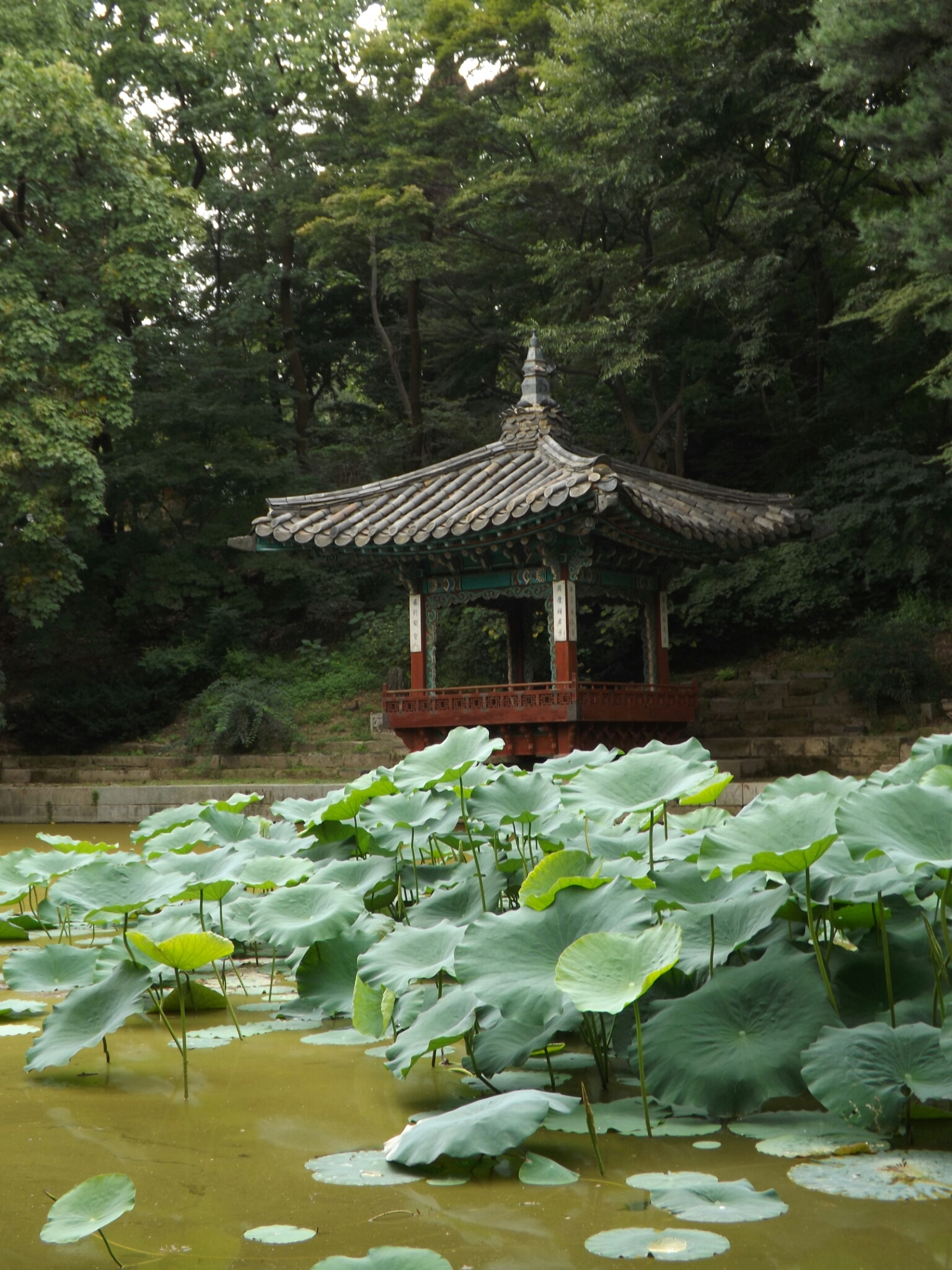 jardin nenufar