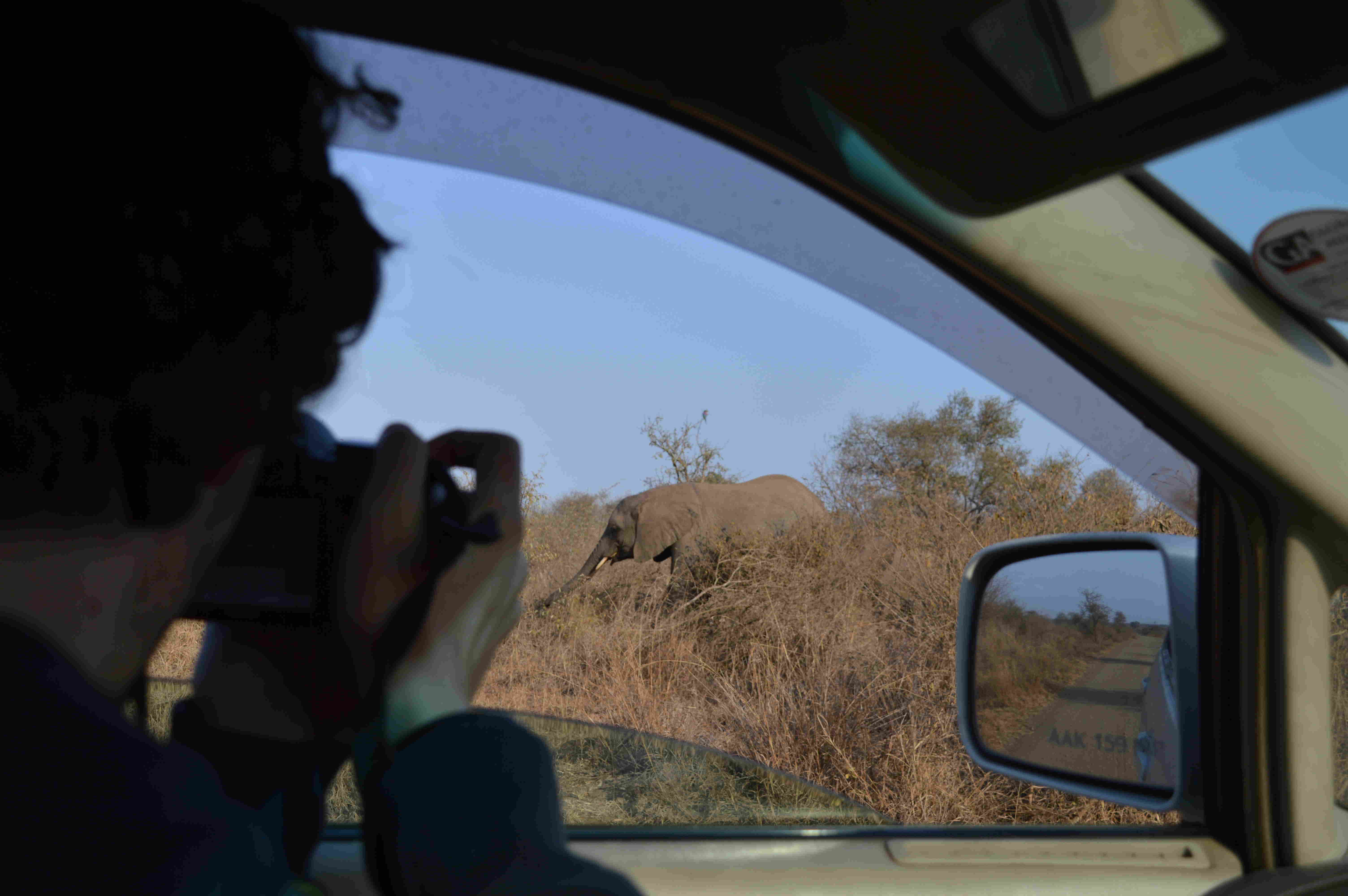 elefanteCoche