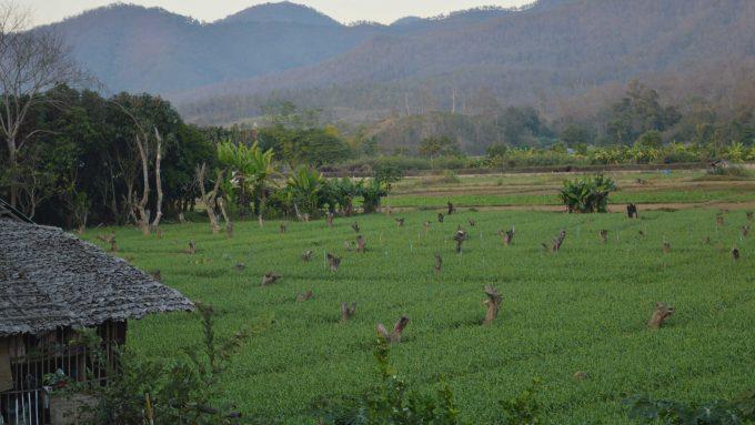 Pai Tailandia